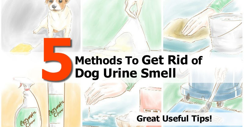 How To Get Rid Of Dog Urine Smell Idees And Solutions