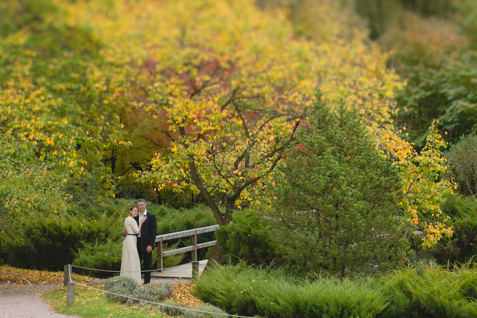 Японский сад москва 16 фотография