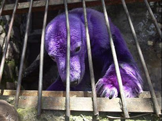 PURPLE Polar Bear is for REAL