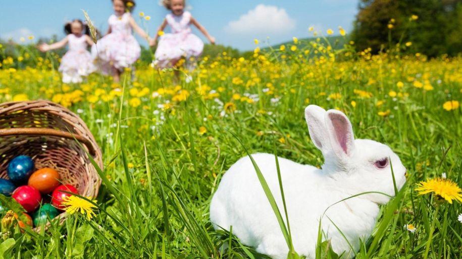 święta wielkanocne, królik, pisanki, wiosna