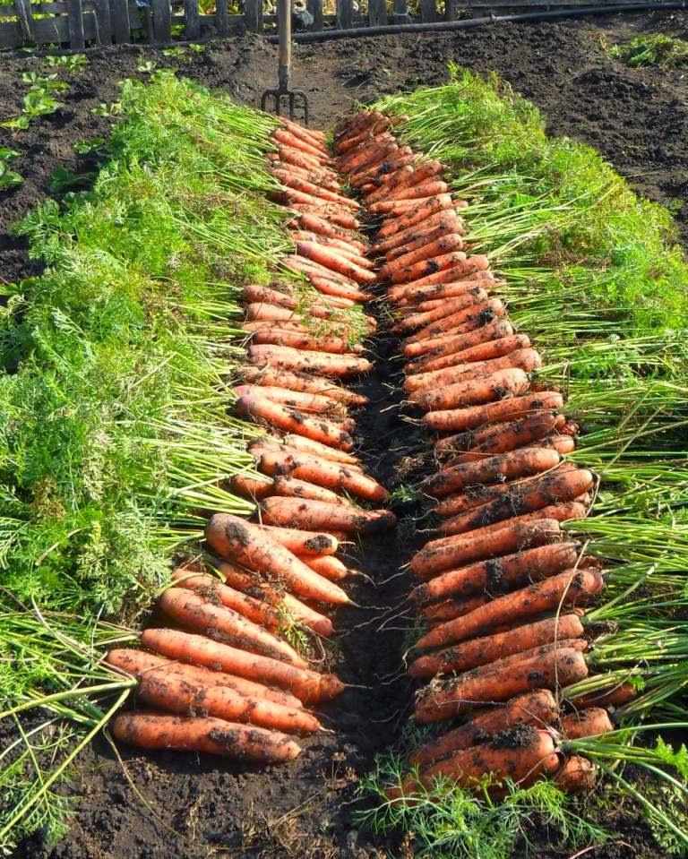 Убрал последнюю морковочку