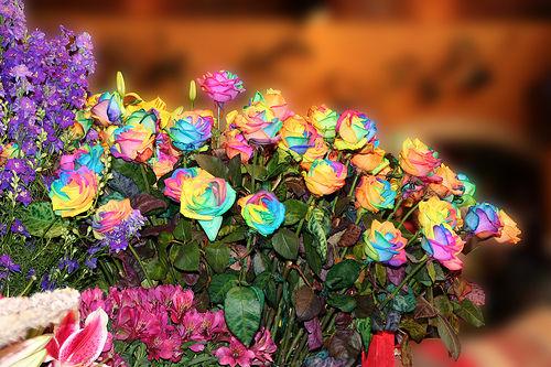 13 'قوس قزح' من أجمل الزهور التي قد تراها   حقن الزهور بصبغات مختلفة