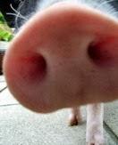 P司司.阿豬