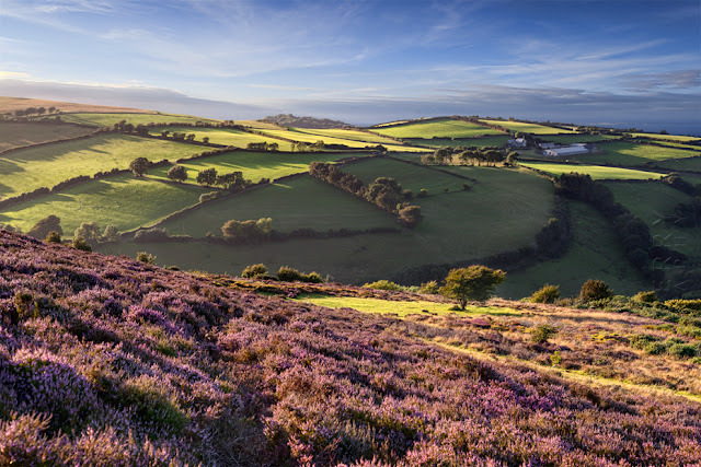 Rolling coastal landscape under warm evening light in Exmoor by Martyn Ferry Photography