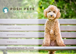 Posh Pets Photography