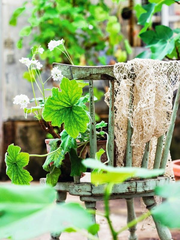 gamle danske potteplanter