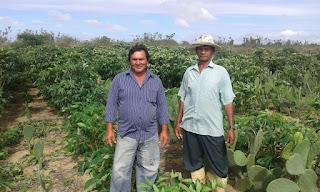 Agricultores de Nova Floresta comemoram chuvas e acreditam em ano de grande produção