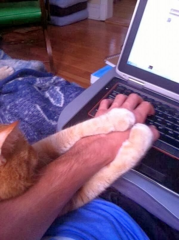 Funny cats - part 79 (35 pics + 10 gifs), cat holds human hand