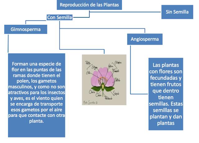 Plantas vasculares sin semilla y Plantas vasculares con semillas
