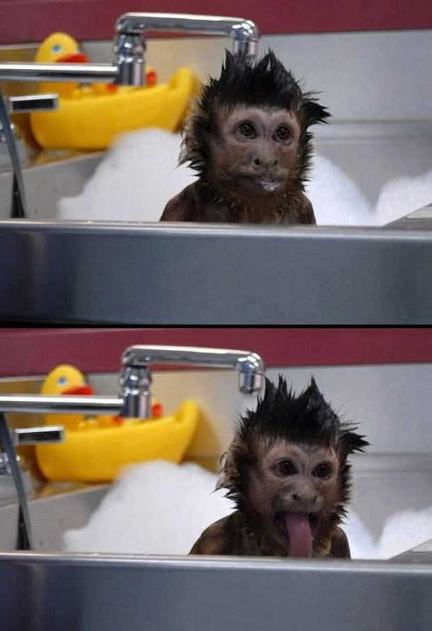 Funny animals of the week - 19 June 2015, funny animal photos, adorable animals, best animals