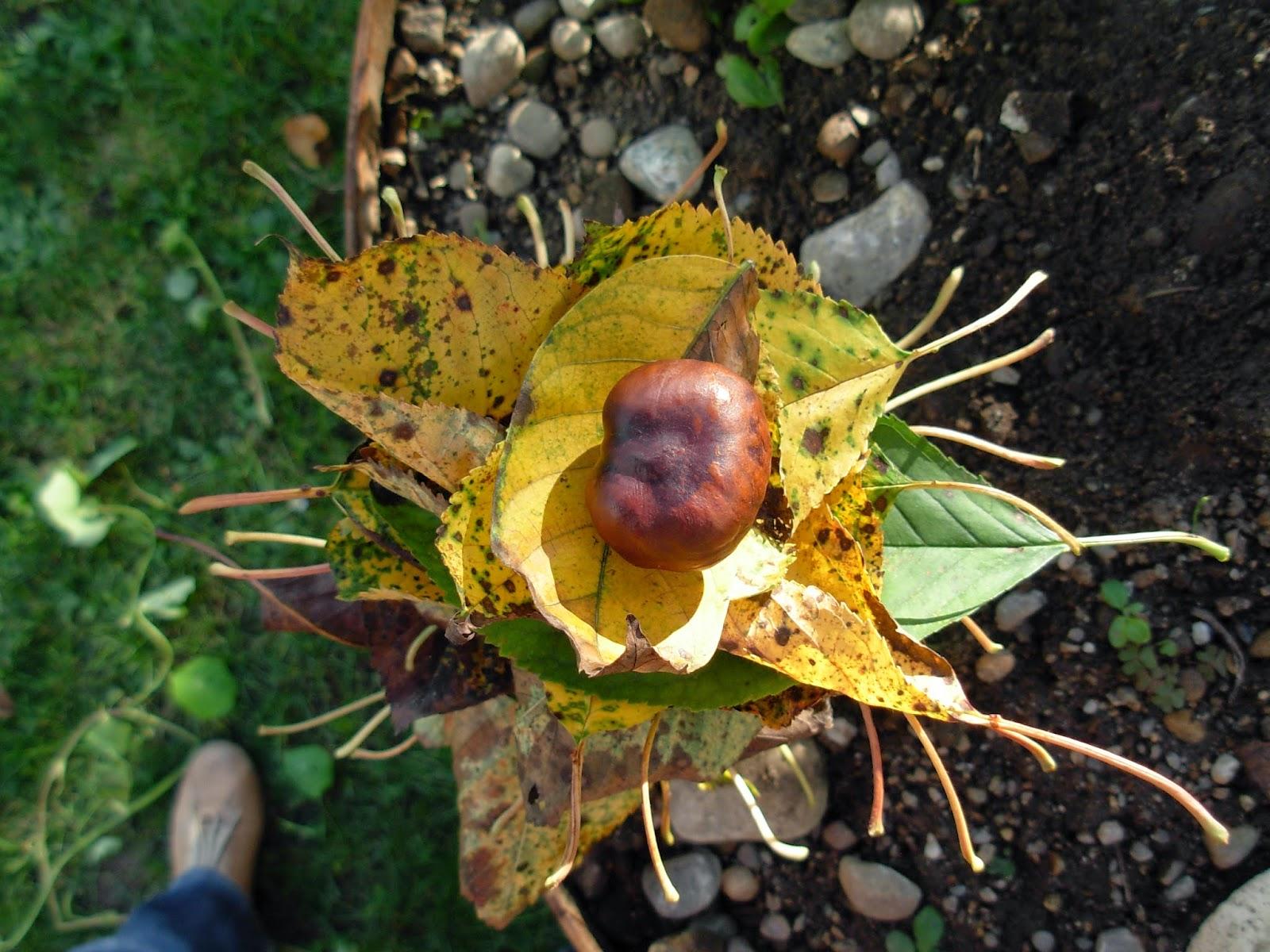 Kleinkinder basteln mit Herbstblättern