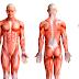 Cadeias Musculares no cotidiano do profissional de Educação Física