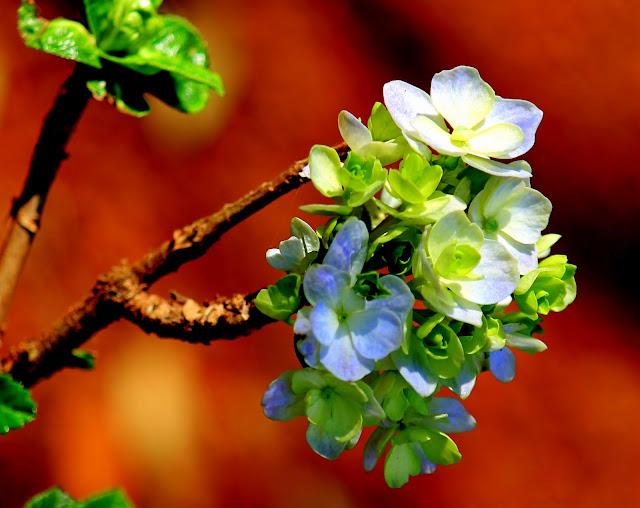 Flores e folhas com fundo laranja