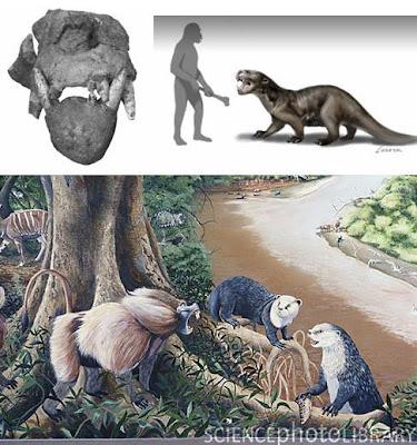 nutria gigante prehistorica Enhydriodon