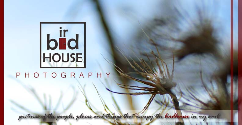 birdhouse photography