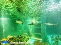 penghuni aquarium kura-kura ocean park