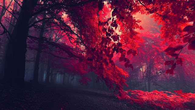 Red Autumn HD Wallpaper