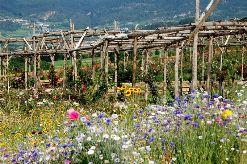 Guida turistica del trentino il giardino delle rose di ronzone - B b il giardino trento ...