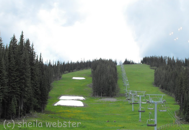 The summer brings out the deer to enjoy the green grass below the chairlift.