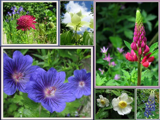 collage met bloemen