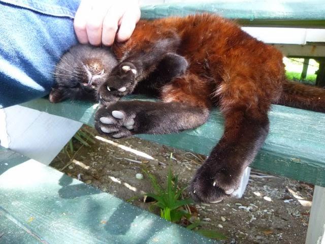 cat at pigeon key florida