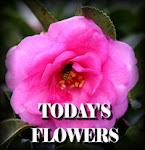 Dagens blomma!