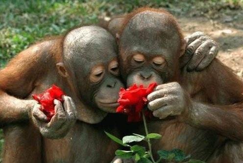 """L'""""ADN poubelle"""" différencie les humains et les chimpanzes"""