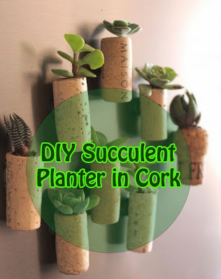 DIY Succulent Planter in Cork