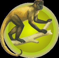 Mono Araña del Norte (Ateles Hybridus)