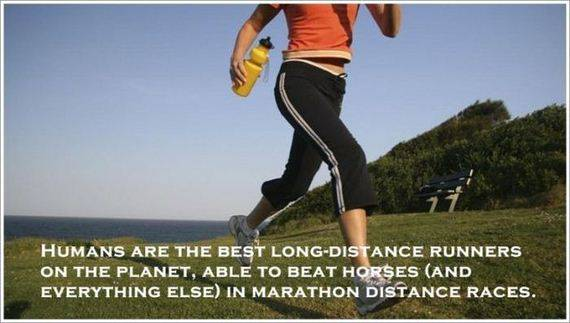 HUMANS ARE THE BEST LONG-DISTANCE RUNNERS ON THE PLANET, ABLE TO BEAT HORSES (AND EVERYTHING ELSE) IN MARATHON DISTANCE RACES.