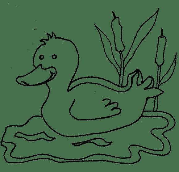 Maestra de Infantil: Animales domésticos para colorear