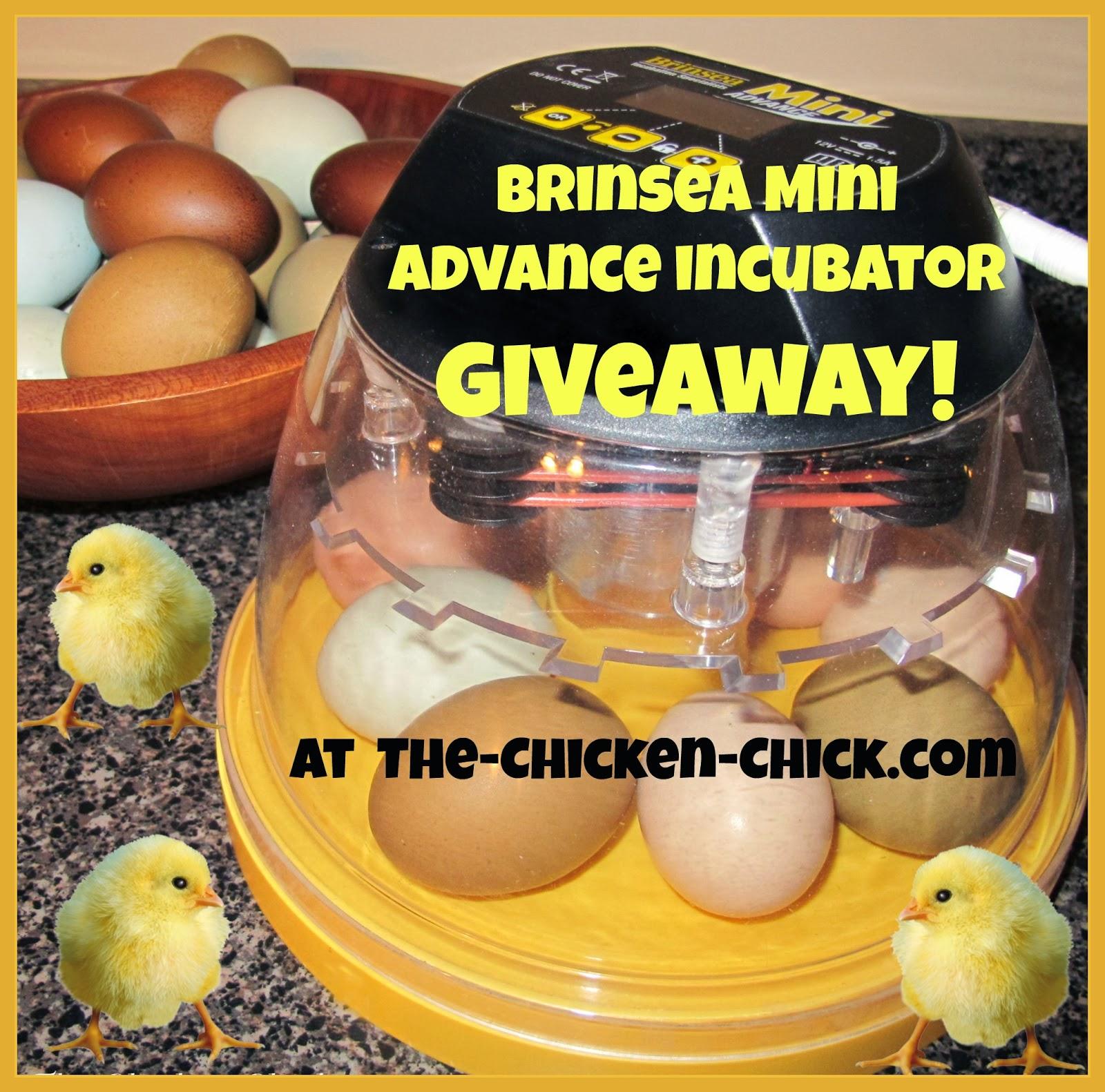 Brinsea Mini Advance incubator giveaway at www.The-Chicken-Chick.com