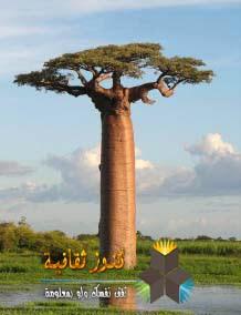 "الباوباب ""Baobab"