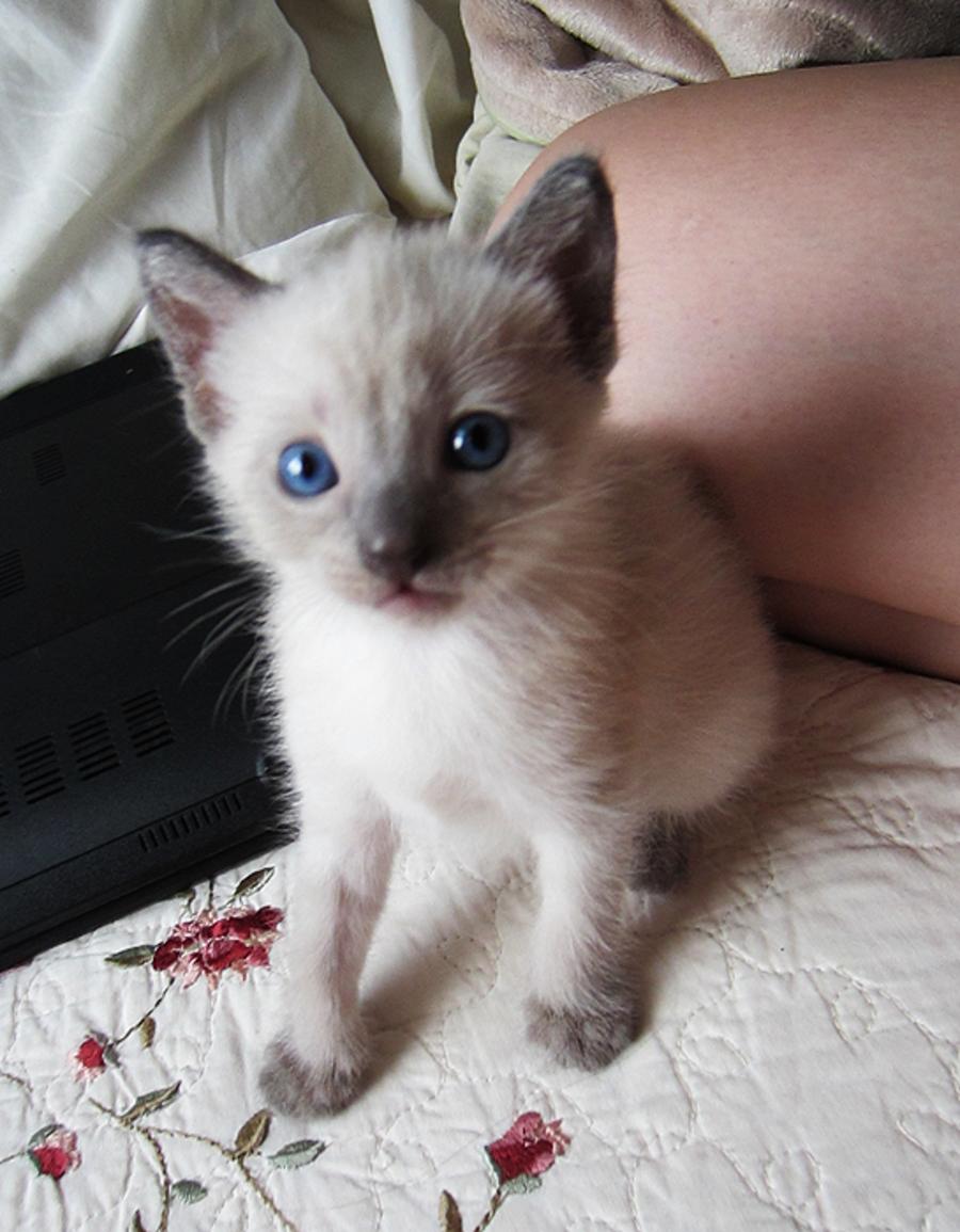 purrington cat lounge