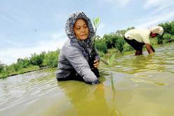 Kelompok Kerja Mangrove Kota Semarang, KKMKS