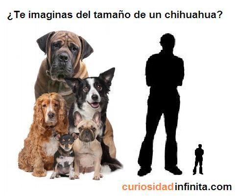persona pequeña, animales, perros de diferentes tamaños, razas