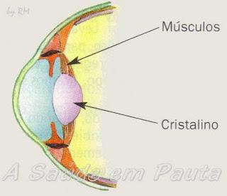 Na acomodação visual, para visualizar objetos próximos, o cristalino fica espesso.