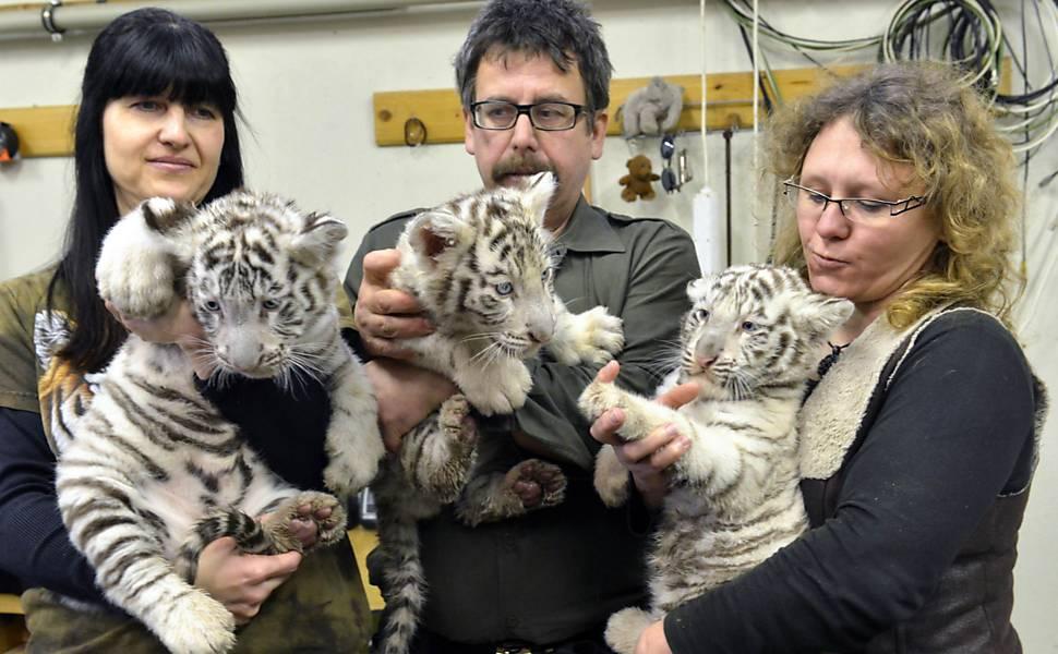os 3 filhotes no colo de funcionários do zoológico