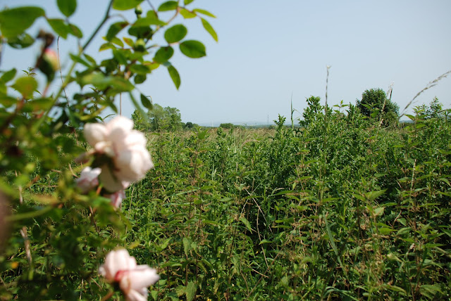 image of summery rural view