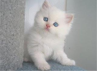 Kucing Yang Selamat selama sebulan tanpa makan dan minum