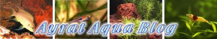Ayrat Aqua Blog