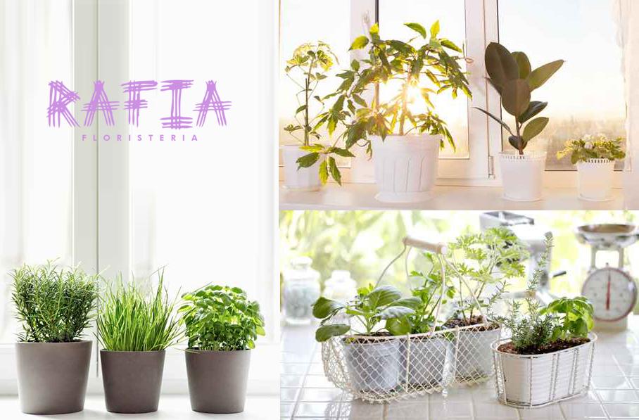 plantas de interior otoño ourense
