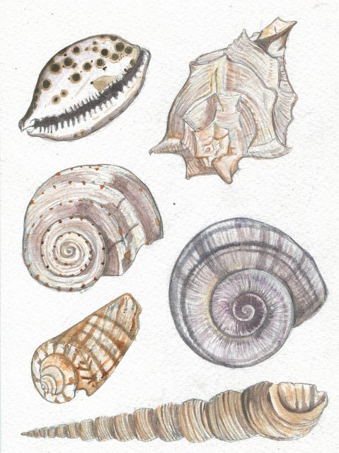 How to draw shell