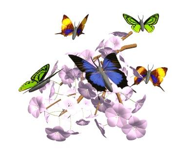 Voltige joli papillon !