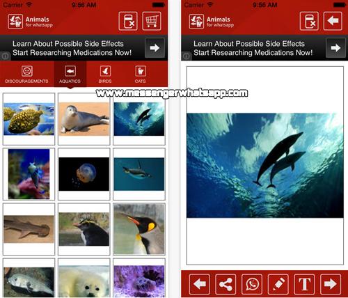 Imagenes divertidas de animales con Animals for Whatsapp