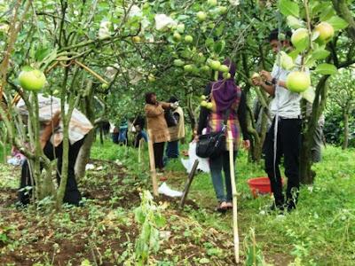 Argrowisata Batu Malang