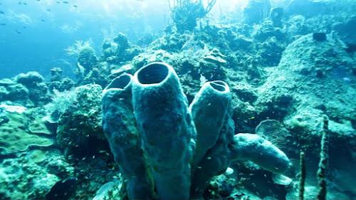A poluição sonora esta impactando a ecologia marinha