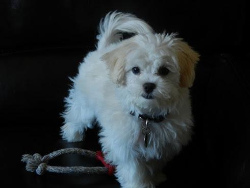 Mon chien MOKA