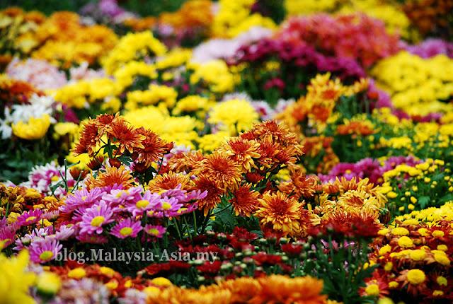 Putrajaya Flower and Garden Festival