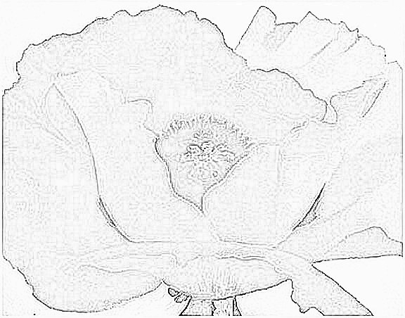 georgia okeeffe coloring pages